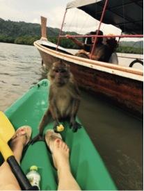 Majmuni su zapravo kradljivci autor: Đina Jakir
