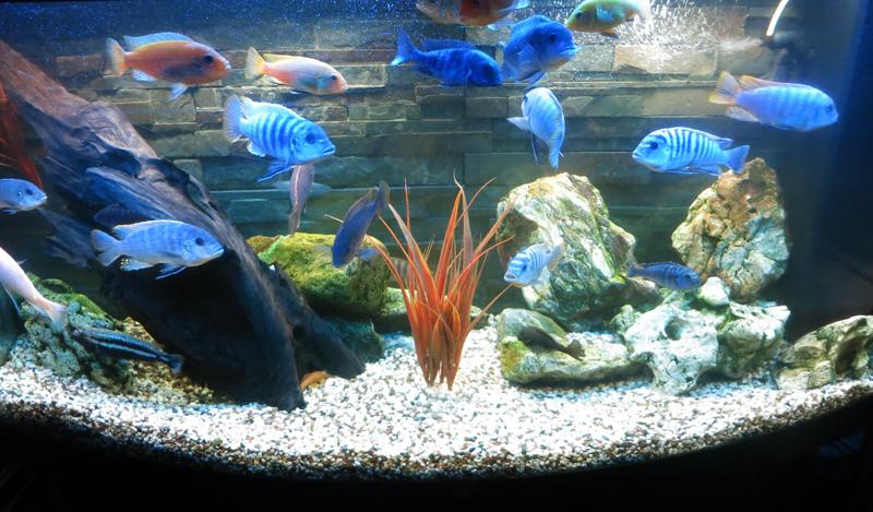 Konoba Primošten - Riblji akvarij Foto: Josip Novosel, Flash.hr