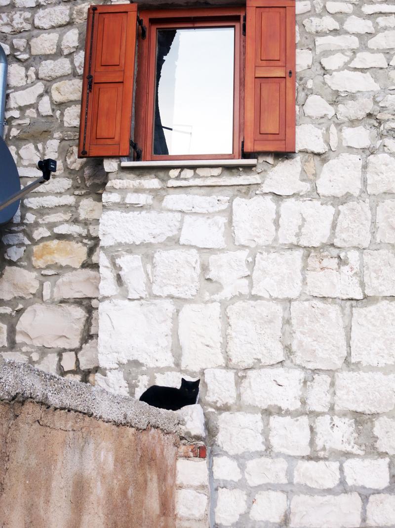 Crna mačka Foto: Josip Novosel, Flash.hr