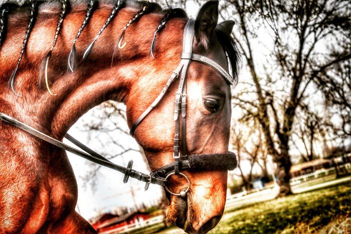 Hipodrom: konj Foto: Josip Novosel, Flash.hr Canon EOS M5